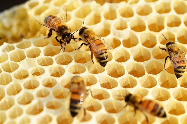 Bienen auf einer Bienenwabe