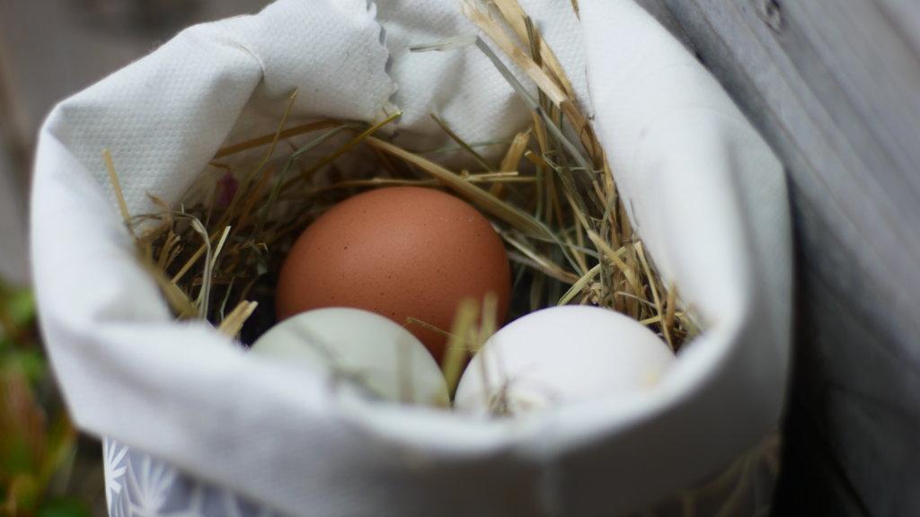 Eier im Lunchbag